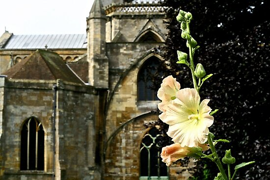 Abbey Flower in August by AW-Photography