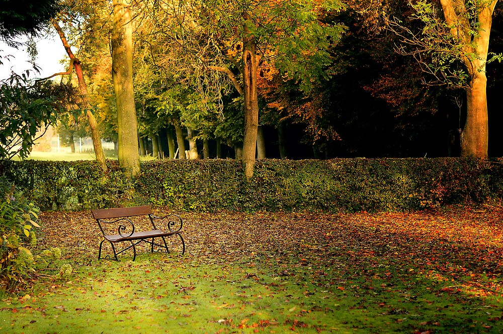 Autumn Colours by RDaviesImages