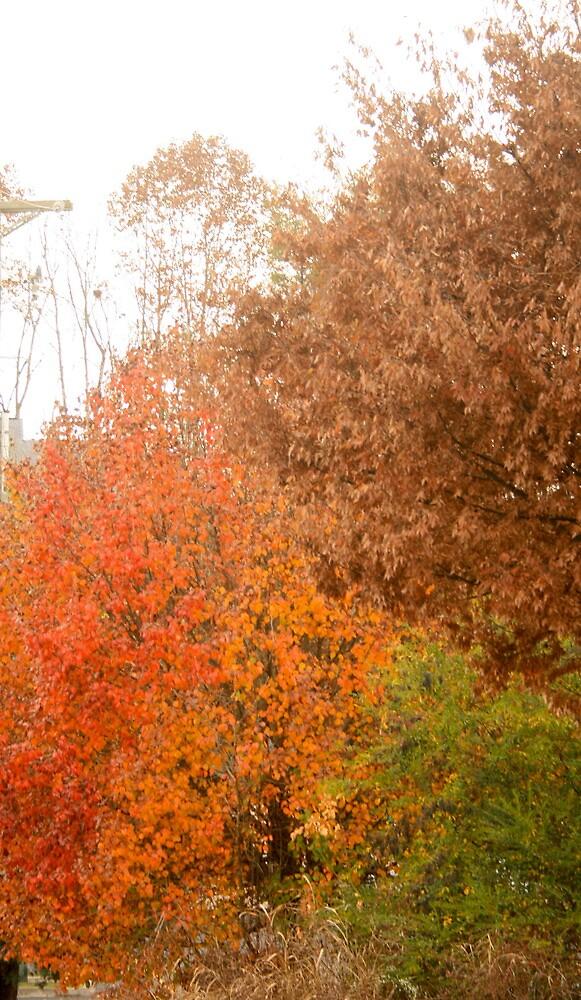 Colors by jeremy19