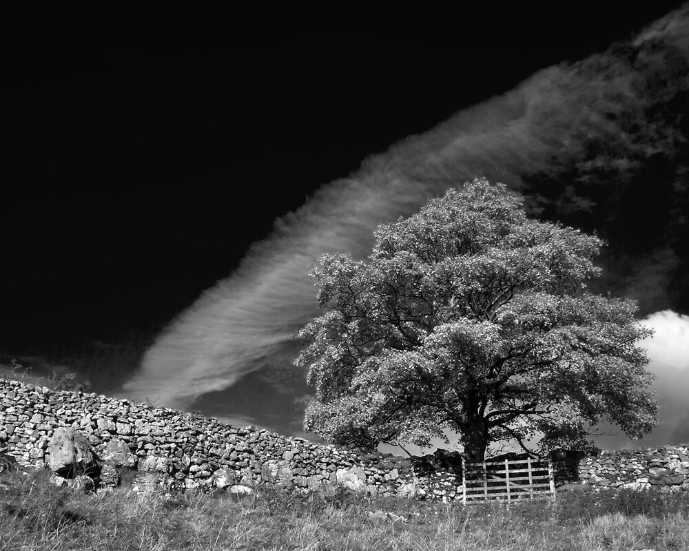 Dramatic tree, Yorkshire Dales by Rebecca Mason