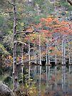 Autumn In The Cypress Swamp by Carolyn  Fletcher