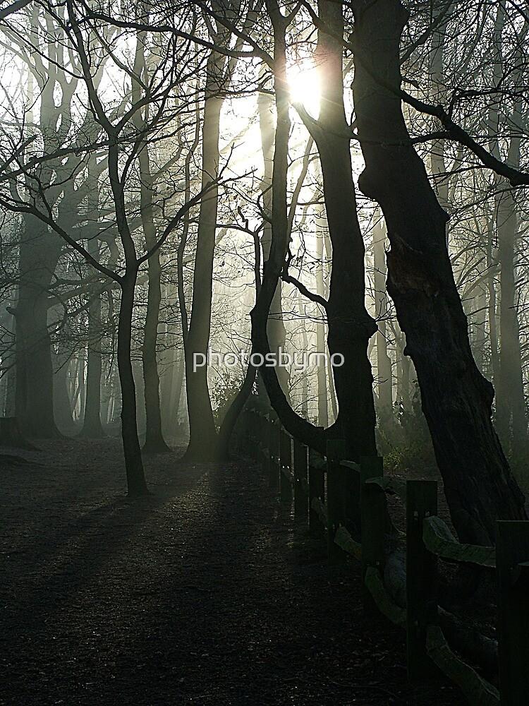 Eery Woodland in Surrey by photosbymo