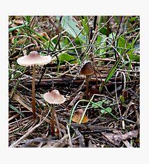 Brown Mushrooms Photographic Print