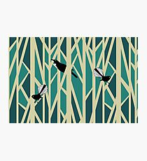 Tui and Fantail on Trees Photographic Print