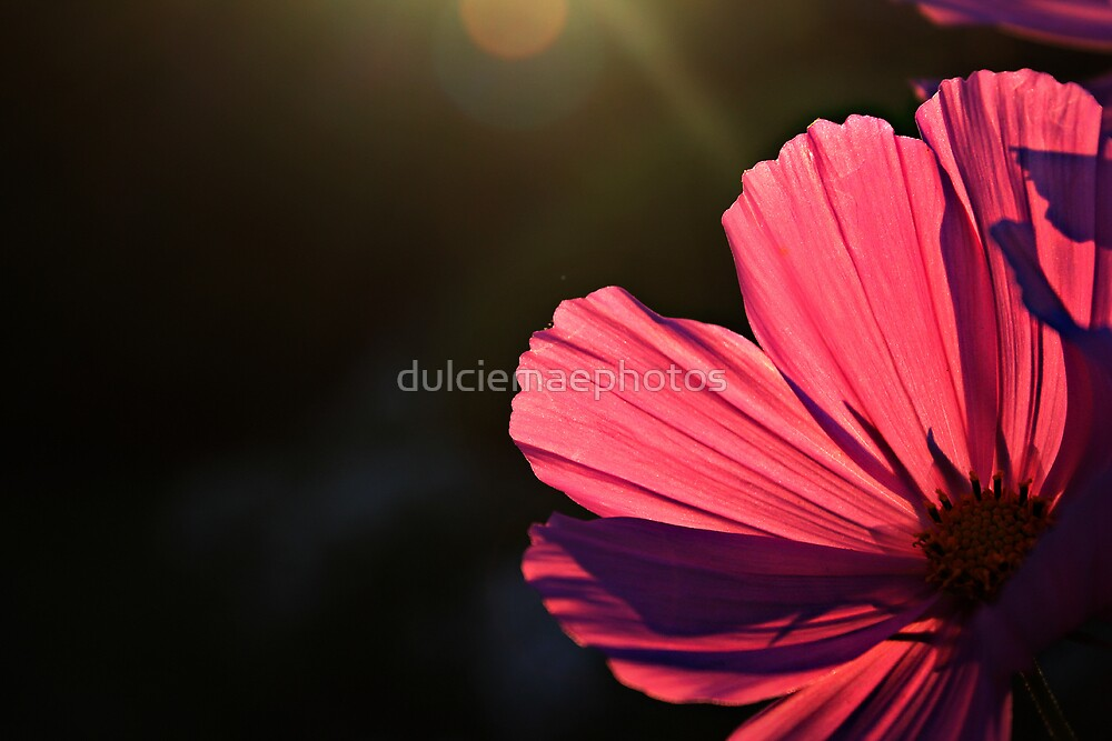 Petals in sunlight by dulciemaephotos