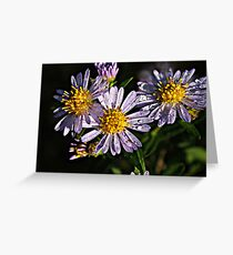 Daisies macro Greeting Card