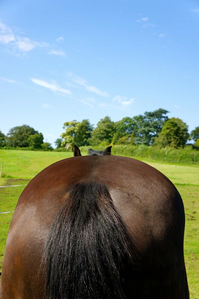 Horse by stelhope