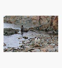 Antarctic Friends Photographic Print