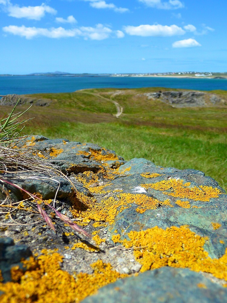Lichen on rocks | Wales, UK by rubbish-art
