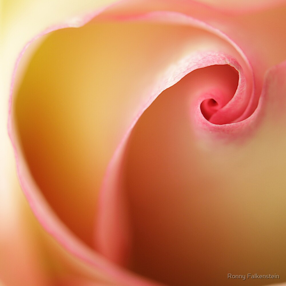 The Rose - Smile of a woman #1 by Ronny Falkenstein