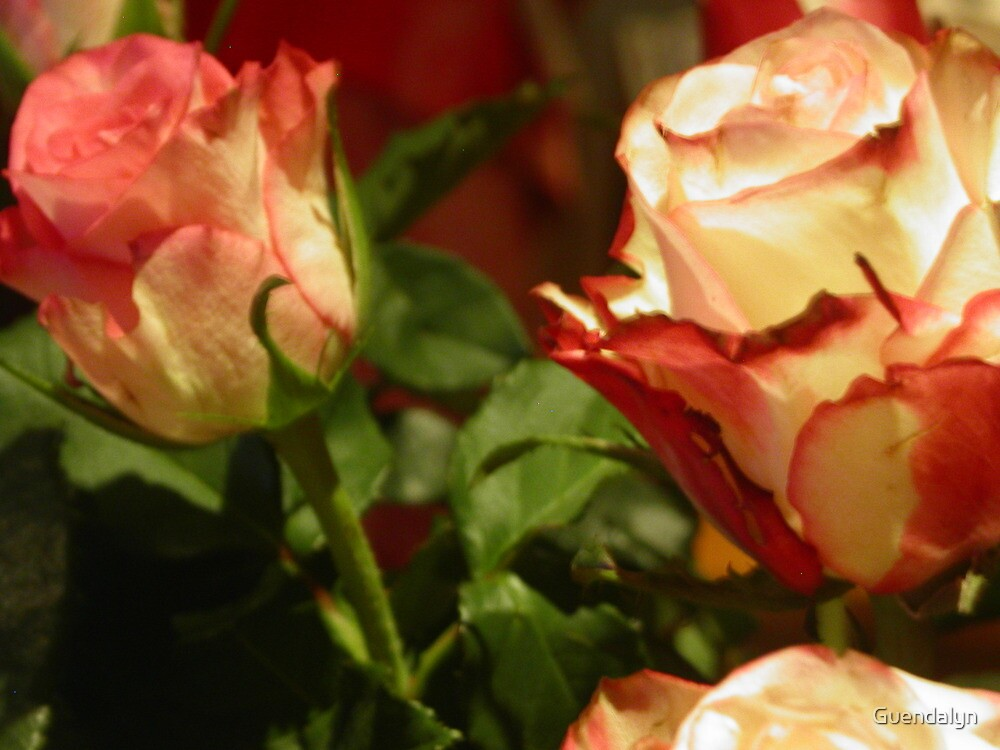 TO YOU MY FRIENDS WHO LOVE FLOWERS -- TO YOU MY FRIEND ROSES  FOR  CHRISTMAS DALL'ITALY !---VETRINA RB EXPLORE 13 NOVEMBRE 2012  !!!! 1800 VISUALIZZAZ MY FRIEND !        !!!! by Guendalyn