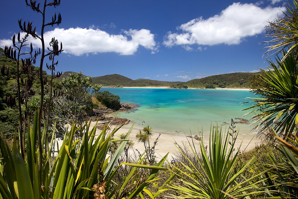 Matai Bay by meredithnz