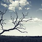 Branched Out by Amy Dee