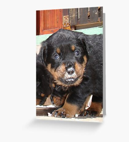 Messy Rottweiler Puppy With Food Covering Nose Greeting Card