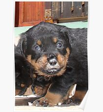 Messy Rottweiler Puppy With Food Covering Nose Poster