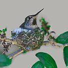 Mama Hummingbird Nesting by Heather Friedman