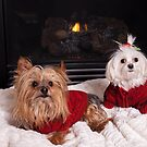 Doggy Date Night by susan stone