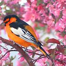 Oh! Oh! Oriole! by Arla M. Ruggles
