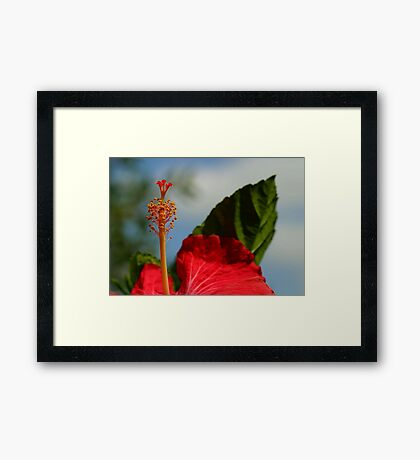 Close Up of Red Hibiscus Stamen and Pollen Framed Print