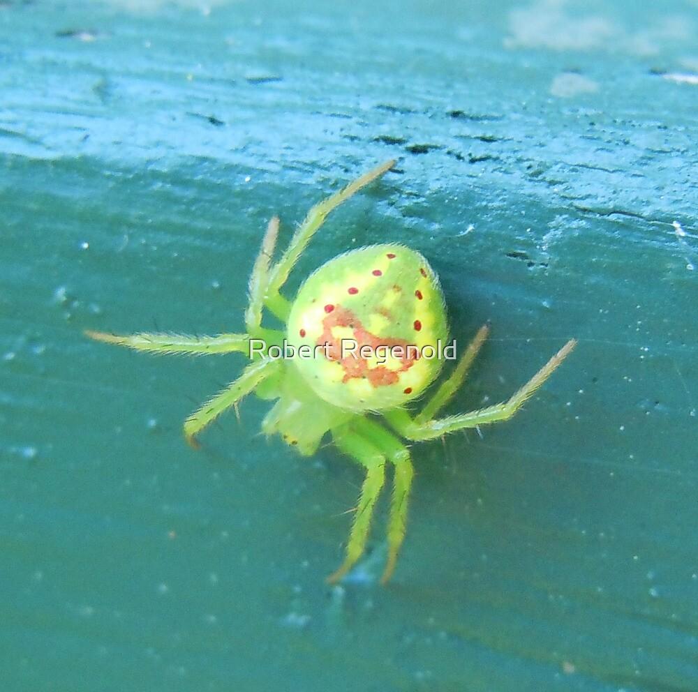 Death Mask Spider by Robert Regenold