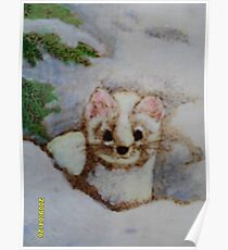 White weasel, white snow Poster