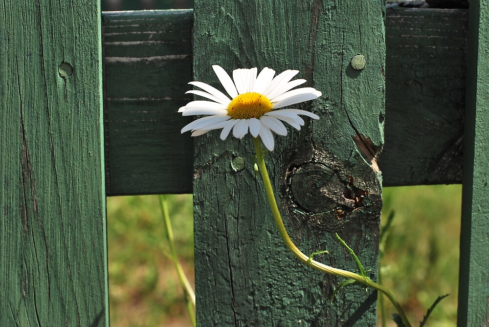 Fleur  by JerryCordeiro