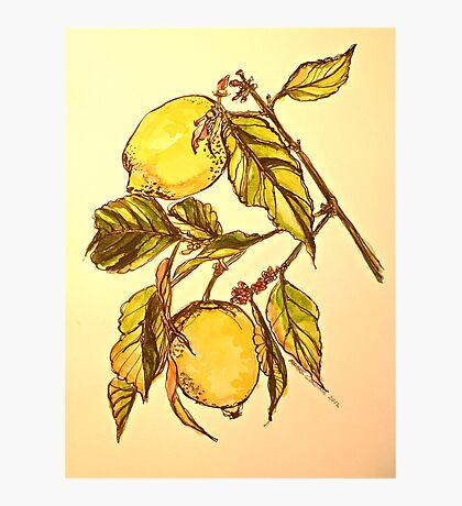 Lemons. Pen and wash 42x32cm Photographic Print