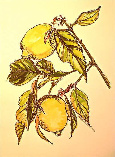 Lemons. Pen and wash 42x32cm by Elizabeth Moore Golding