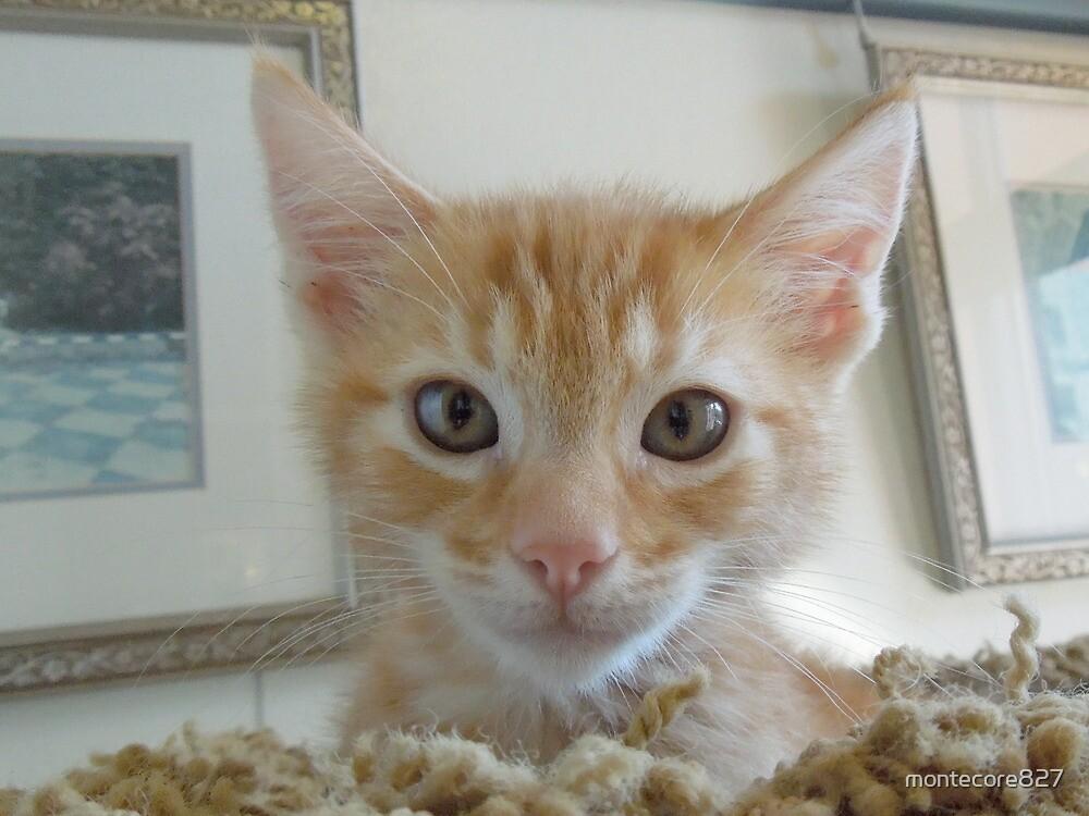 I R Cute Kitten by montecore827