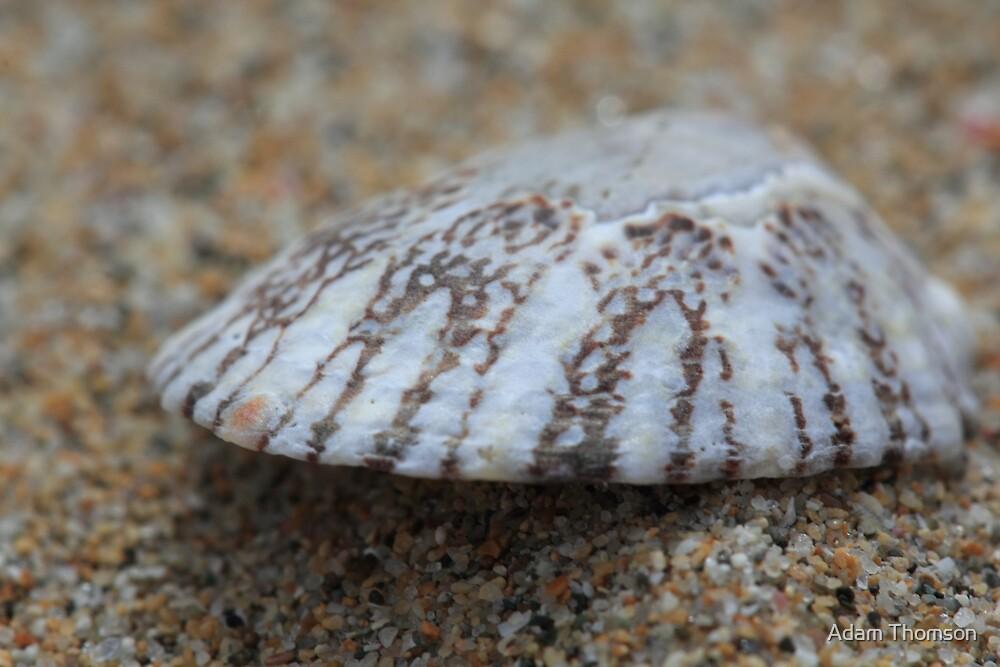 Shell shock by Adam Thomson