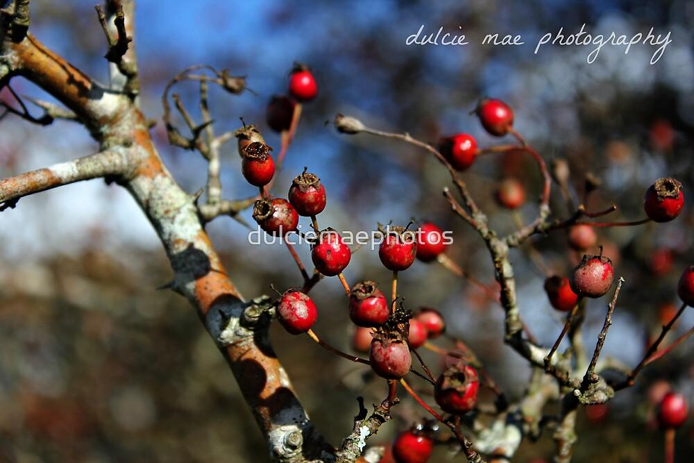 Autumn berries by dulciemaephotos