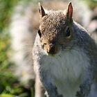 Squirrel in Regents Park by ellismorleyphto