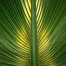 Palm Leaf Symmetry by John Gaffen