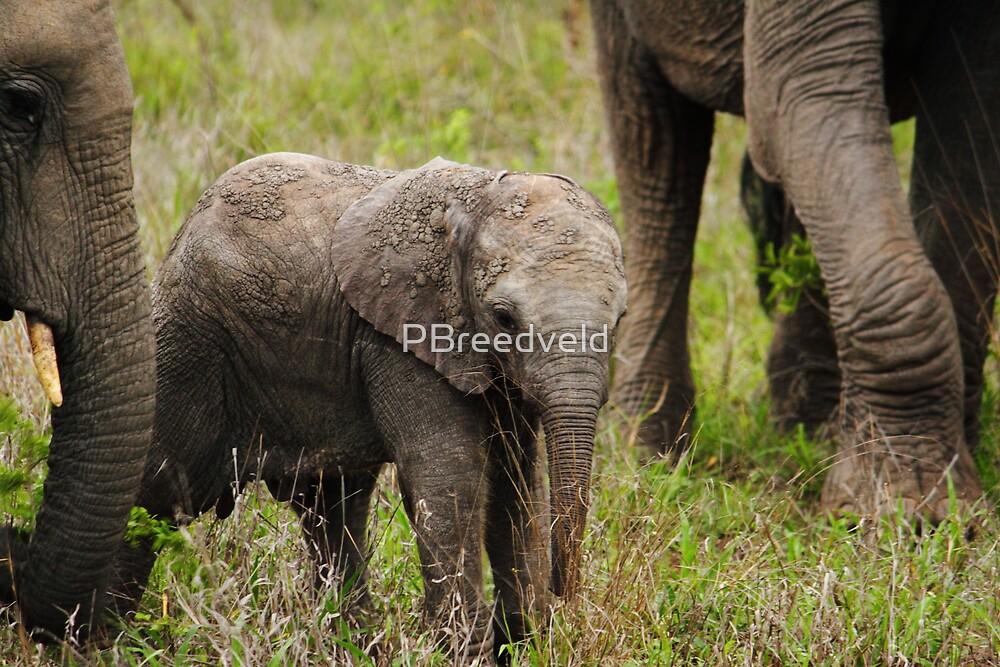 Elephant calf 2 by PBreedveld