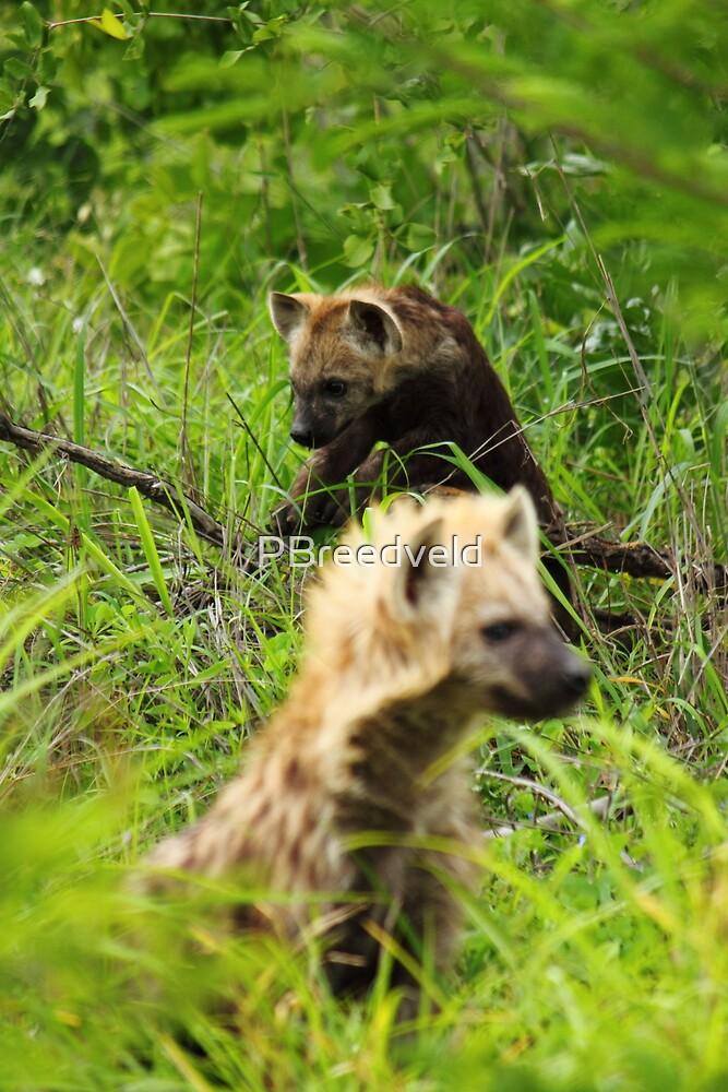 Hyena pups 2 by PBreedveld