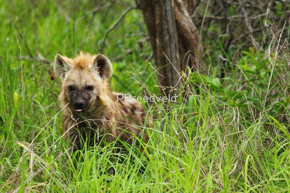 Hyena pups 4 by PBreedveld