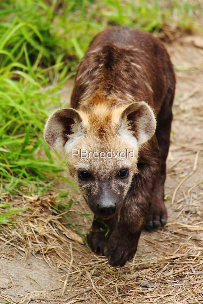 Hyena pups 7 by PBreedveld