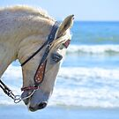 Horse At The Beach 2 by ©Dawne M. Dunton