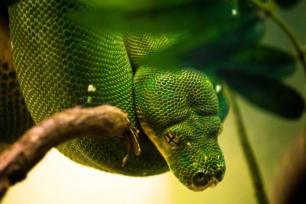 Snake Eyes by Sean Balanger