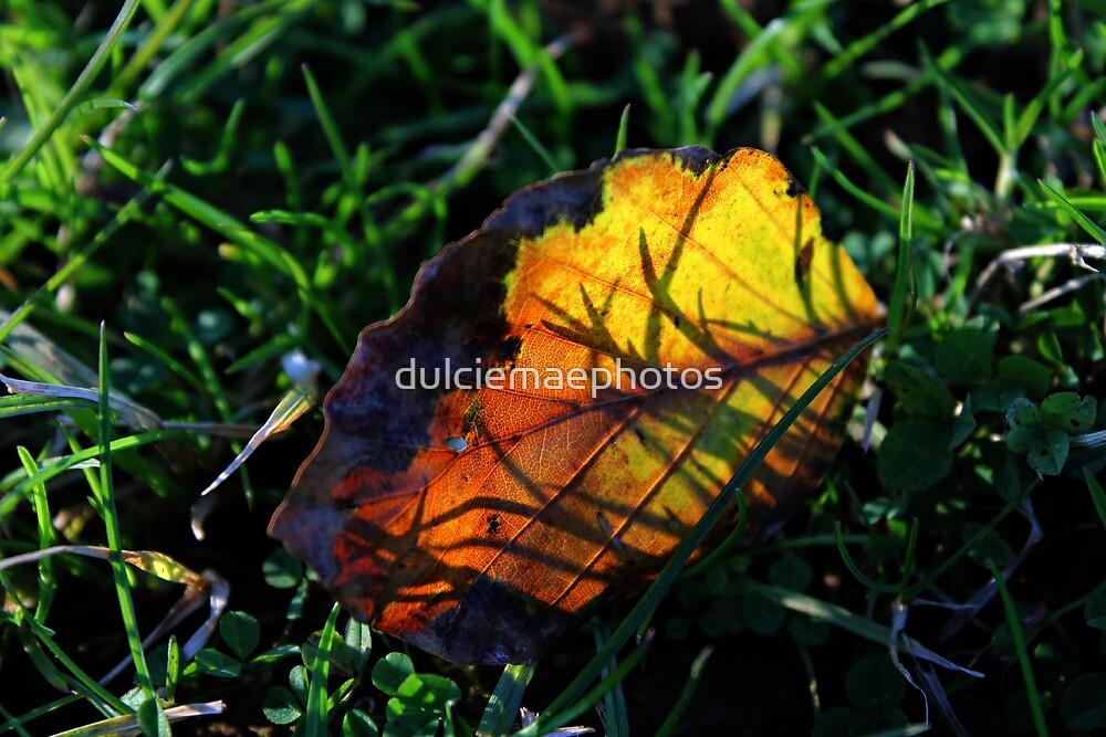 Colourful leaf by dulciemaephotos