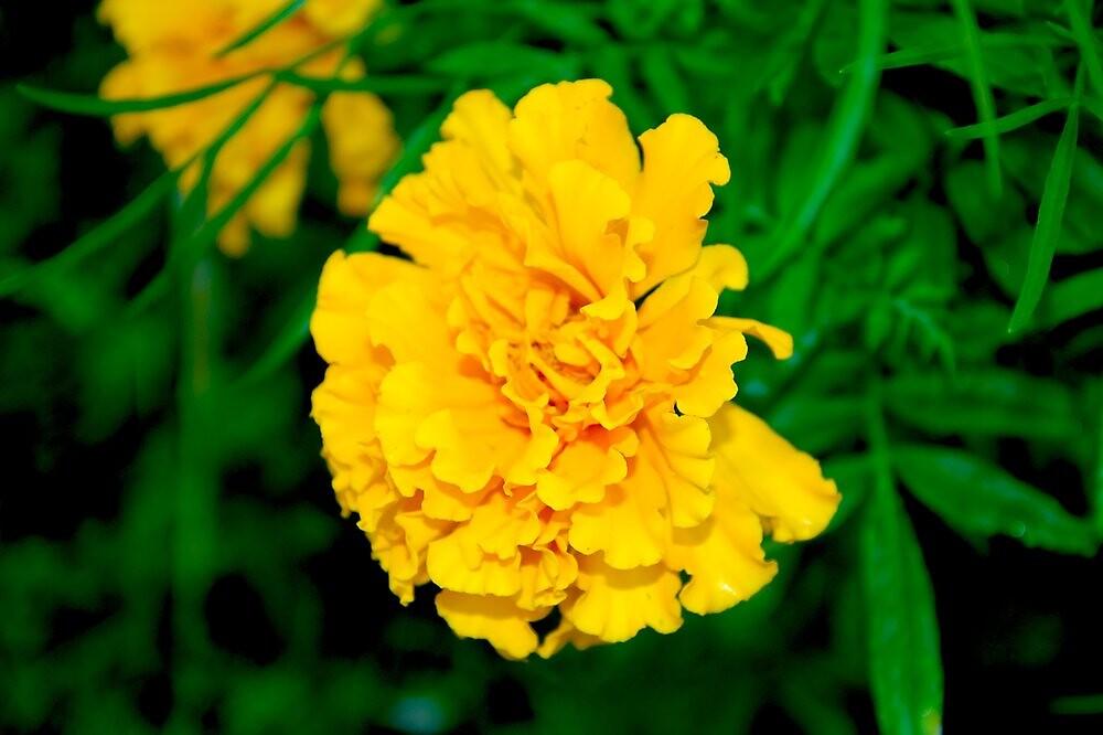 Wildflower of Orange by BlackTopaz