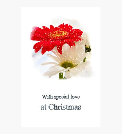 Christmas daisy Photographic Print