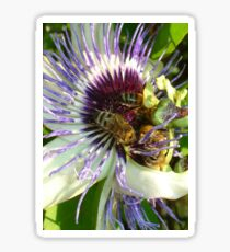Close Up Of  Passion Flower with Honey Bee Sticker