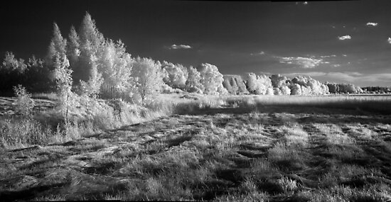 Infrared panorama by bogfl