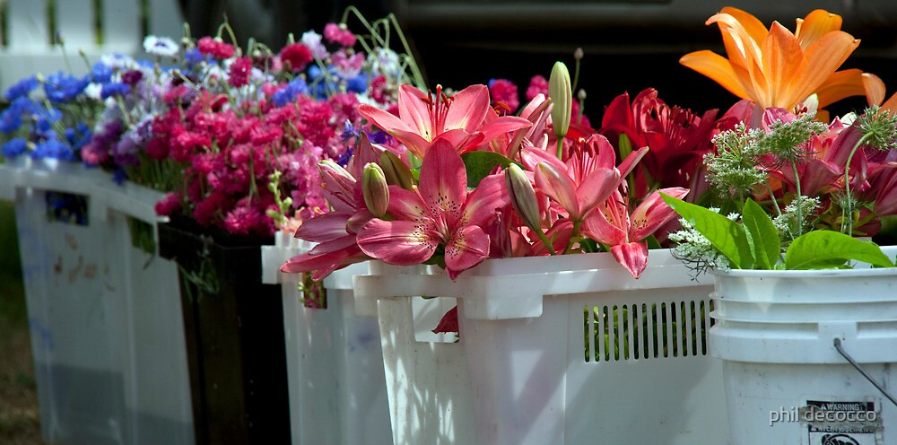 Pails Of Posies by phil decocco