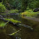 Portola Redwoods State Park, CA by Zane Paxton