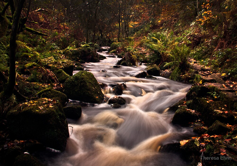 Wyming Brook in Autumn by Theresa Elvin