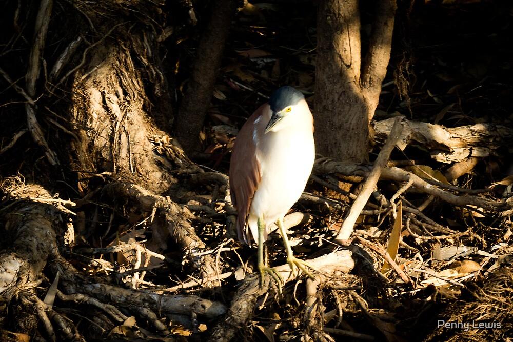 Kakadu Bird by Penny Lewis