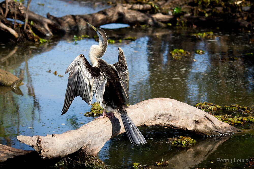 Shag on a stump by Penny Lewis