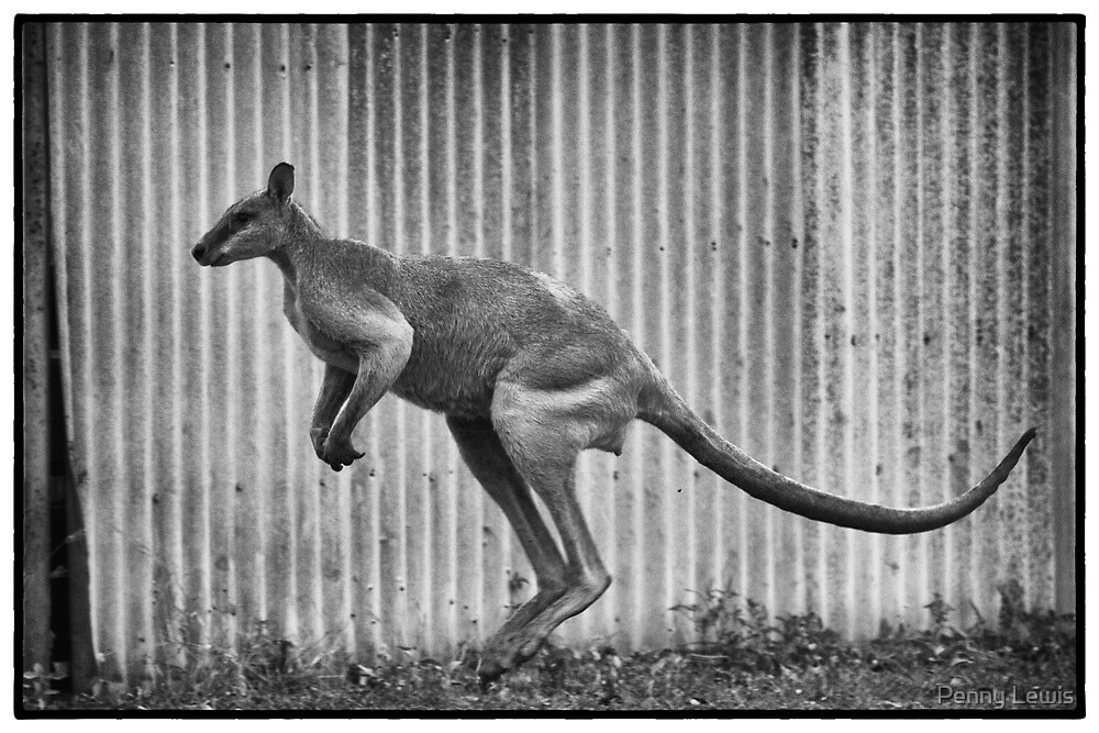 Hopping Roo by Penny Lewis